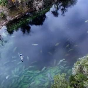 Manatees Florida Kayaking