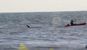 orca hitting a kayak