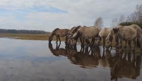 spring Latvia Paddle world