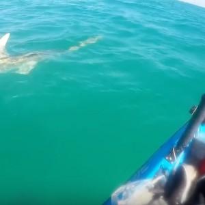 Stalked By A Hammerhead Shark!!! - Florida Keys paddle World