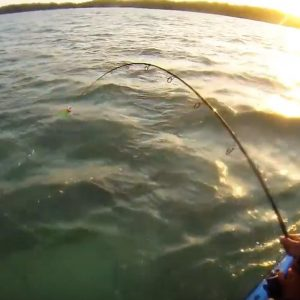 kayak fishing paddle World