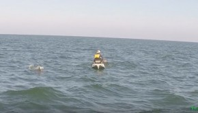 30 miles out shark attack Paddle World