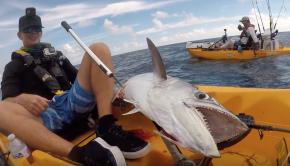 WATCH YOUR Feet With These RAZOR SHARP Teeth! GIANT King Mackerel-Deep Blue Kayak Fishing Charters