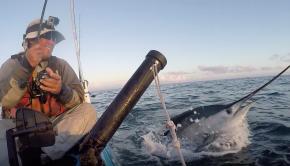 Glorious Sailfish catch - Key West Kayak Fishing