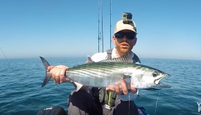 Halibut, Calicos & Bonito 60 Miles Out | #FieldTrips