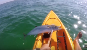 5 things to NEVER do with a SHARK in a KAYAK!