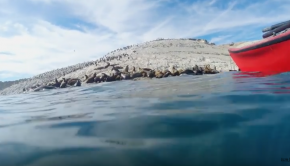 Kayaking with Sea Lions in Patagonia | Lizzie Daly