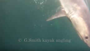 Porbeagle Shark 2018 Ireland, kayak angling.