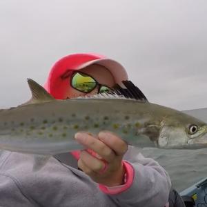 """Spanish mixed with Bulls"" - Bullreds & Spanish mackerel - Fishing Pensacola Florida"