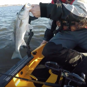 Spring Striped Bass Fishing