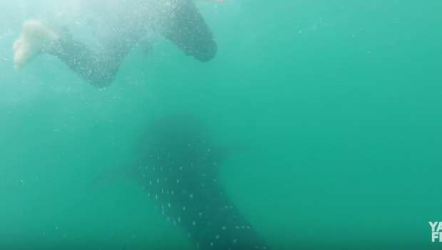 Swimming with Sharks & Offshore Kayak Fishing | Field Trips Panama