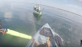 Shark SLAMS into my kayak (hobie compass)