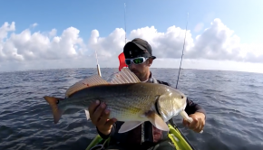 redfish, sheepshead, black drum, and annoying size blues