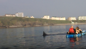 Kayaking with basking shark