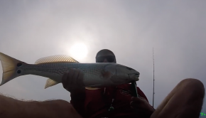 Non-Stop ROD BENDING ACTION Multi species reef fishing Pensacola Florida