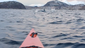 whale watching on a kayak in Lyngen Fjord