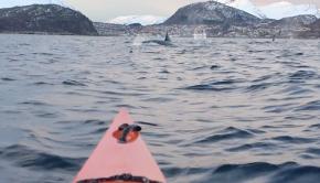 whale watching on a kayak in Lyngen Fjord