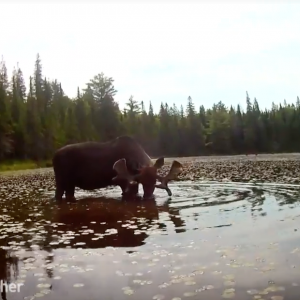 Kayaking with MOOSE, an adventure we're sure you've never experienced