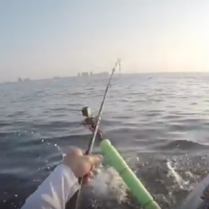 Kayak Offshore Fishing- Tiger Shark Tries to eat my Snapper!!!!