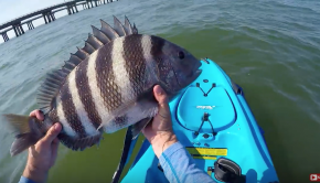 Sheepshead Training Day (CBBT Kayak FIshing)