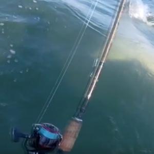 HAMMERHEAD SHARK vs. KAYAK FISHERMAN (NEAR MISS ATTACK)
