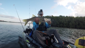 Amazing Giant Cuda and Snook Kayak Fishing FeelFree Dorado Biscayne Bay