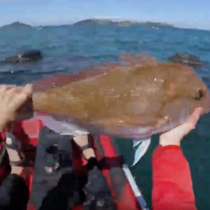 Kayak Fishing In The Coromandel Mussel Farms For Snapper & Other Tablefish | Spring 2018