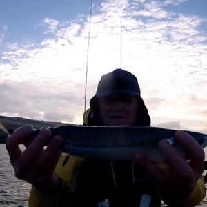 Kayak Fishing - Winter Mackerel, Herring, and a Few More