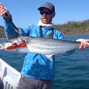 Big Mackerel EXPLODES on Topwater in Panama