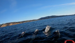 Kayaking with Pacific White-Sided Dolphins