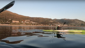 Sigi's first trip out, Yellowtail craziness at Simonstown
