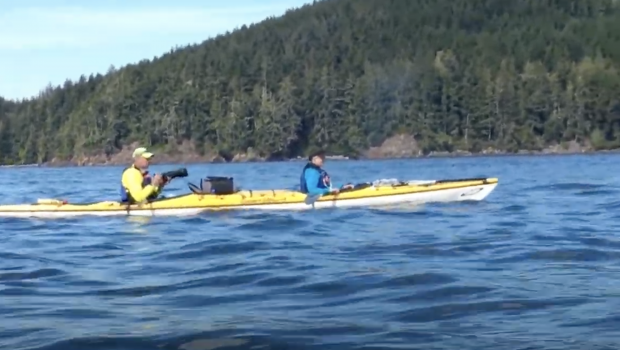 Sea kayaking with Orca, Humpbacks and Grizzly bear Vancouver Island, Canada