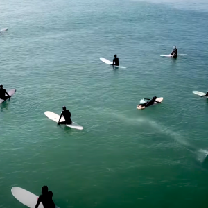 whale swims beneath surfers