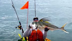 Follow Robert Field doing some offshore kayak fishing with a new group of clients at Los Buzos Resort in Panama; the action is on fire like usual.